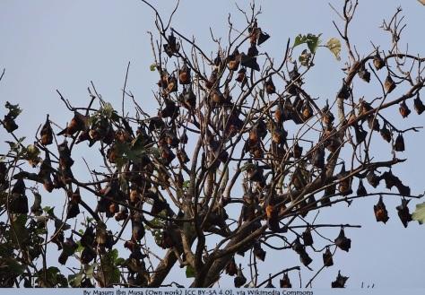 Bat_in_the_tree_at_Boga_Lake,_Bangladesh
